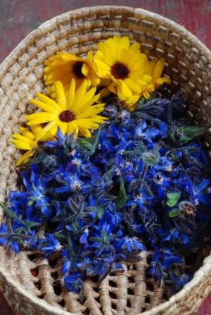 Borage (Borago officinalis) and Calendula flowers