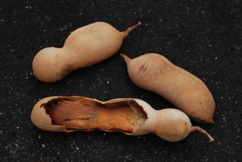 Tamarind fruit (Tamarindus indica)
