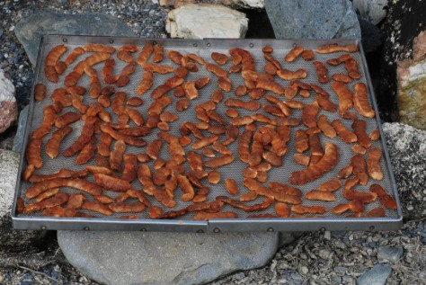 Tamarind drying