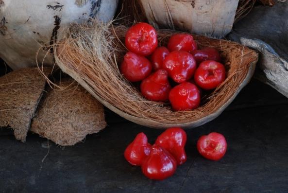 Bell fruit Syzygium samarangense