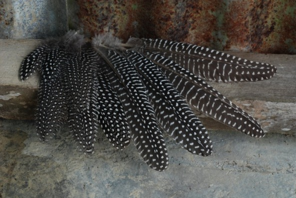 Guineafowl feathers