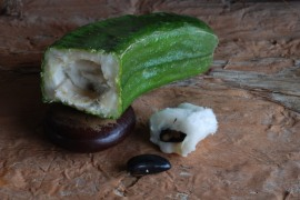 Ice Cream Bean (Inga feuilleei) (Edible)