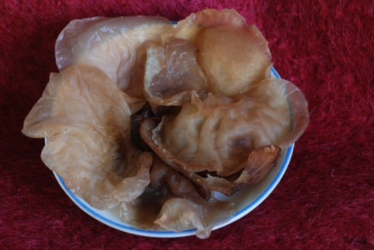 Jews ear fungi Auricularia auricula-judae,