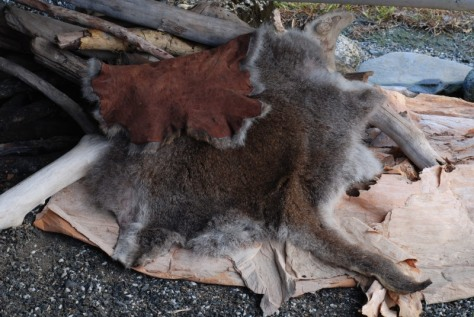 Red Necked Wallaby (Macropus rufogriseus) fur