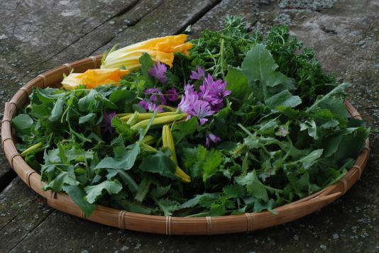 Weed & Flower Pesto