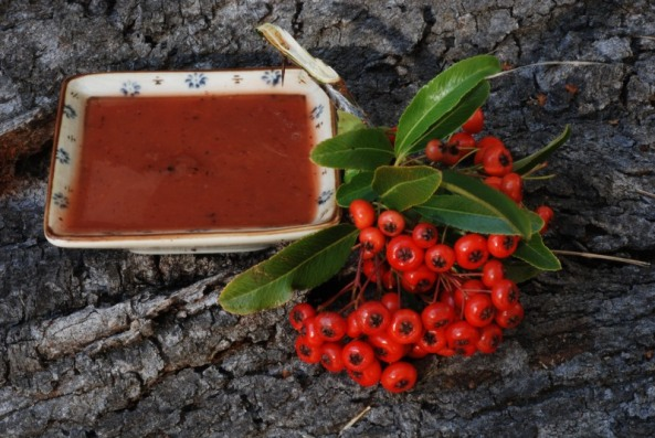 Firethorn berries (Pyracanthus sp.) n sauce.