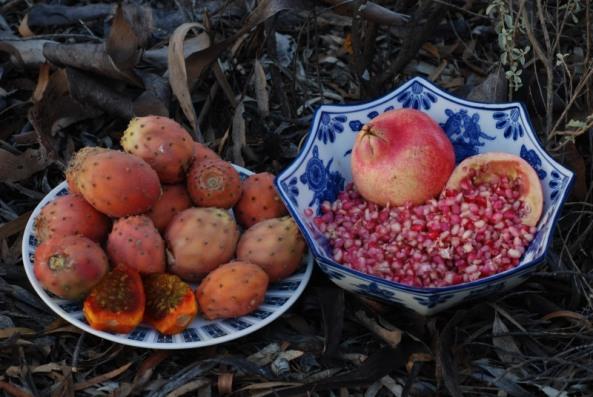 Prickly Pear (Opuntia sp.) & pomegranate (Punica granatum)